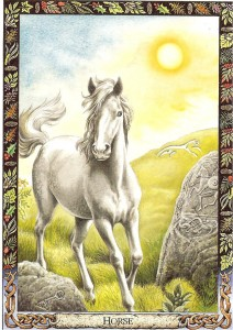 Horse card in druid oracle
